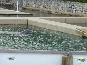 Bahamas Kreuzfahrt – Grand Bahama Dolphins.