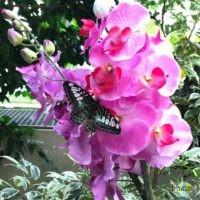 Schmetterlingshaus.